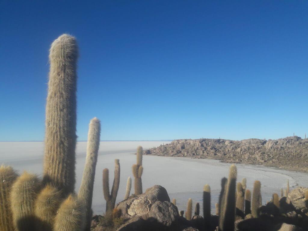 A fantástica inca Huasi com seus cactos gigantes. Aqui só no inverno mesmo.