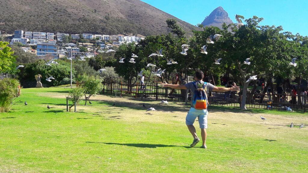 Este parque bonito e muito bem cuidado não pode faltar no seu roteiro Cape Town.