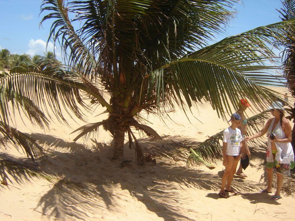 O movimento das dunas que chegam a quase encobrir os coqueiros.
