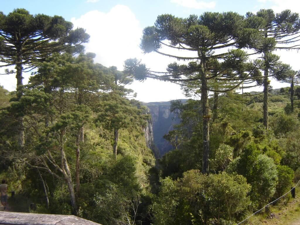Floresta de Araucária e Mata Atlântica na Região dos Cânions no Rio Grande do Sul