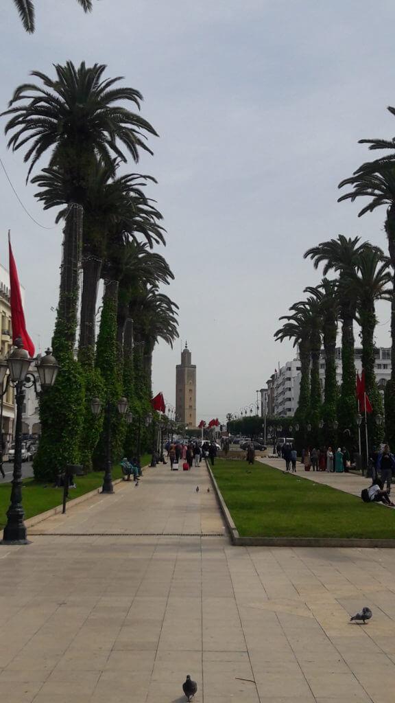 A Avenida Mohamed V com as lindas palmeiras