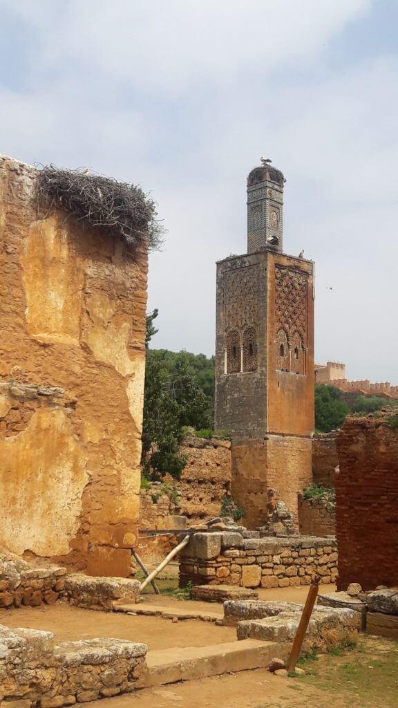 O Minarete e a cegonha em Chellah