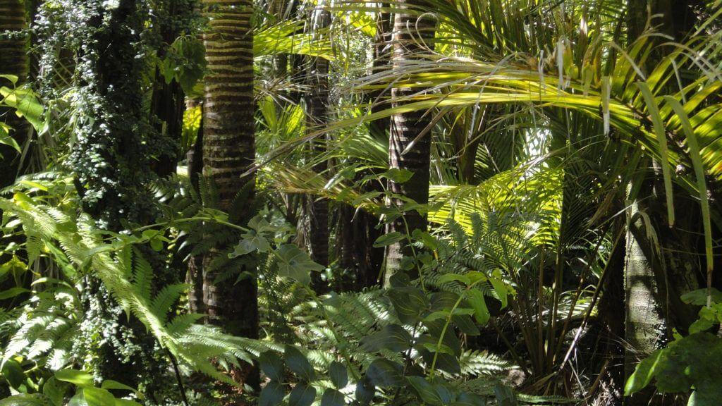 A diversidade de Floresta Amazônica encanta turistas de todo o mundo. Passeio de barco em Manaus