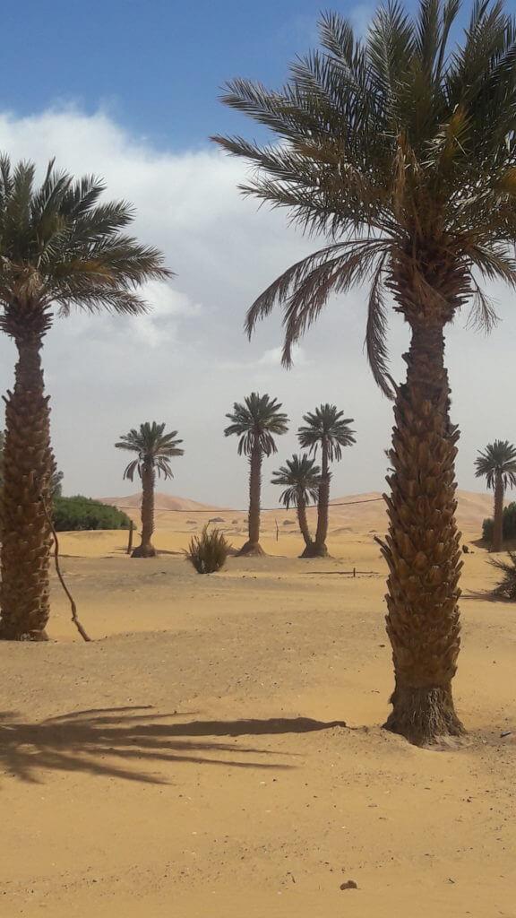 Quando saí do hotel já dei de cara com as dunas Erg Chebbi e palmeiras