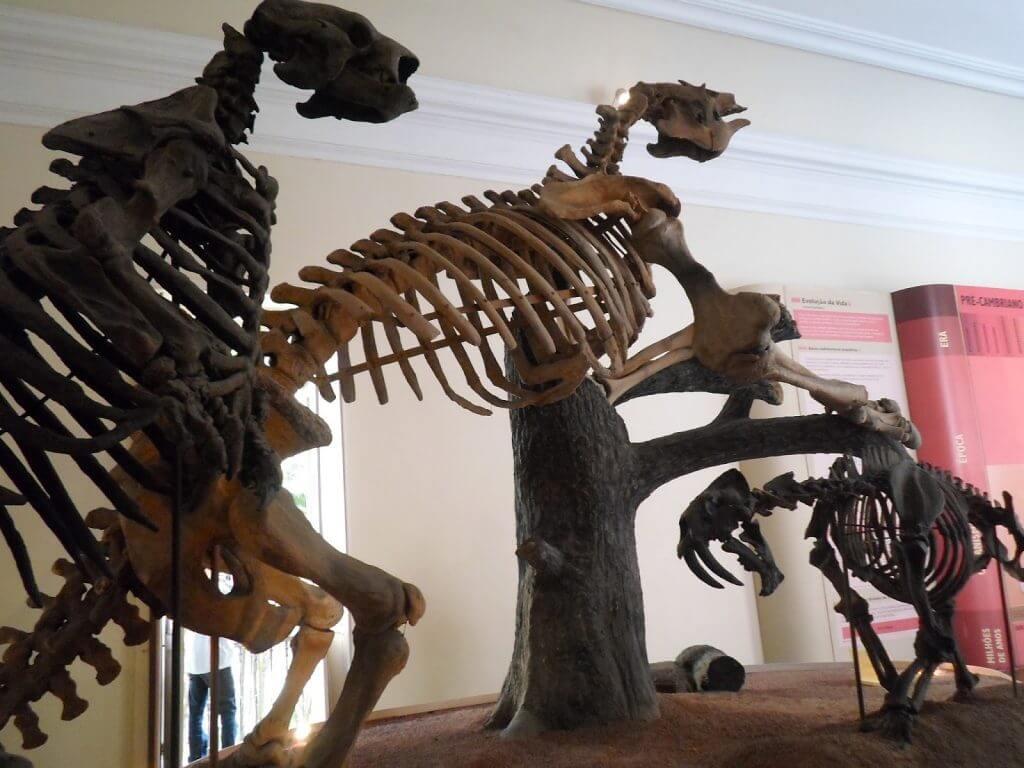 Esqueletos de preguiças gigantes