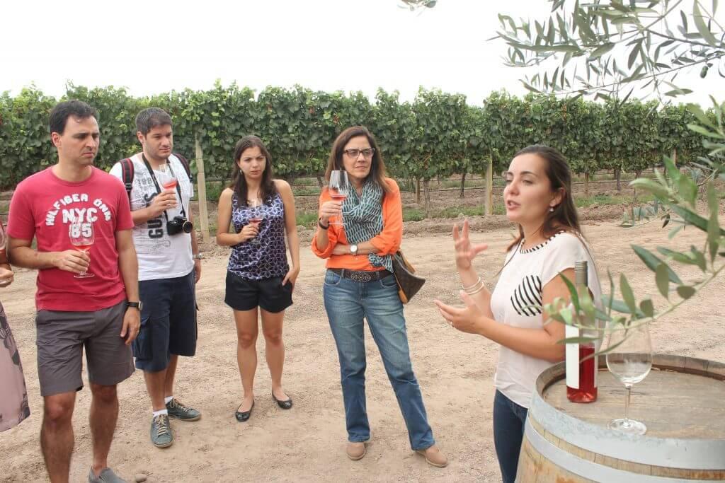 A guia explicando tudo sobre vinhos