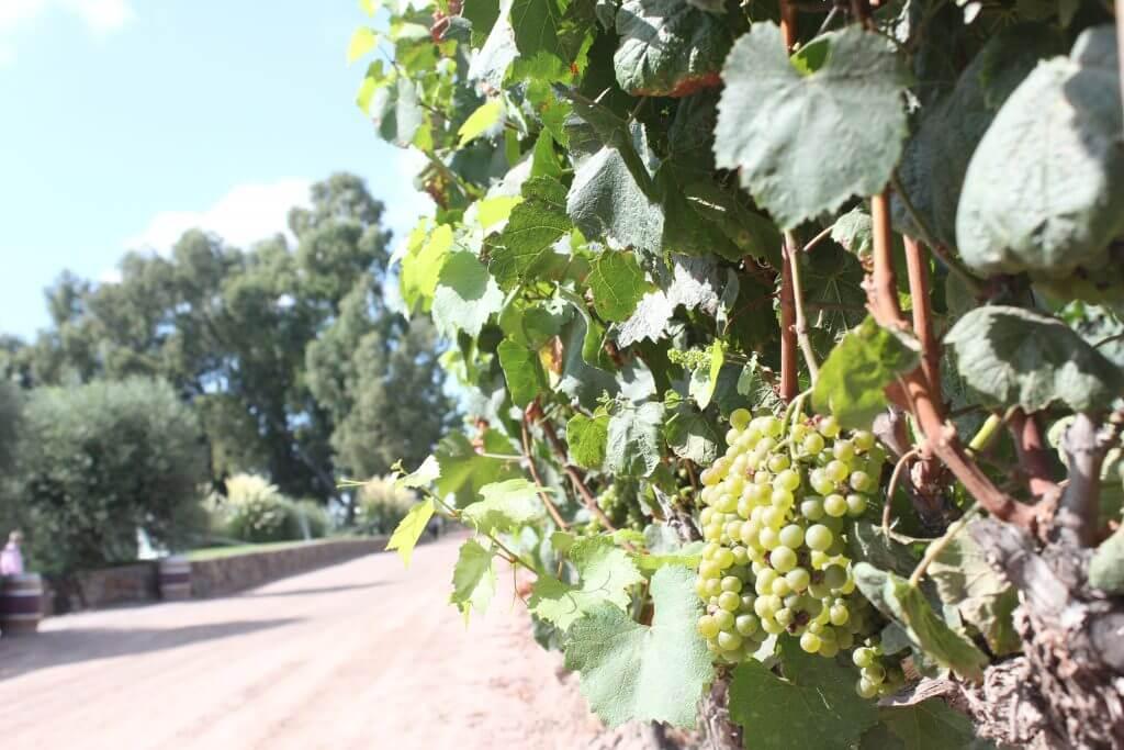 A beleza dos Vinhedos nos deixa em dúvida sobre quais vinícolas visitar em Mendoza